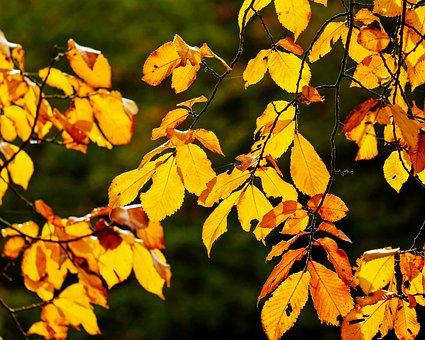 Autumn, Fall Foliage, Leaves, Orange, Yellow, Red