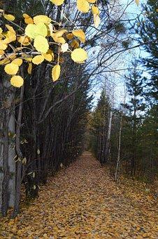 Autumn, Listopad, Golden Autumn, Leaves, Yellow Leaves