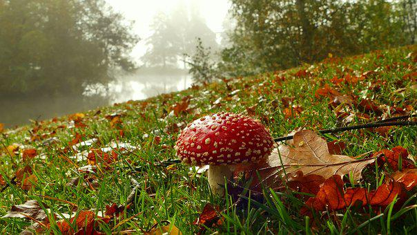 Mushroom, Red, Fly Agaric, Autumn, Toxic, Nature