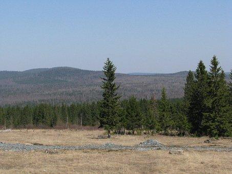 Open Space, Forest, Hills, Dahl, Nature, Landscape