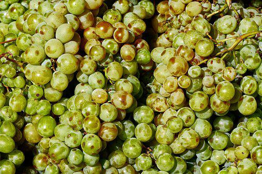 Vines, Grape, On The Vine, Grapes, Fruit, Benefit From