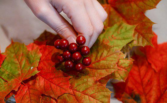Hobby, Autumn, Leaves, Hand, People, Activity, Berry