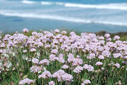 Pink Flowers, Pink Flower, Spring, Coastal, Costa