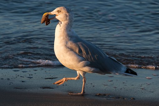 Seagull, Crab, Wave, Baltic Sea, Sea, Water, Beach