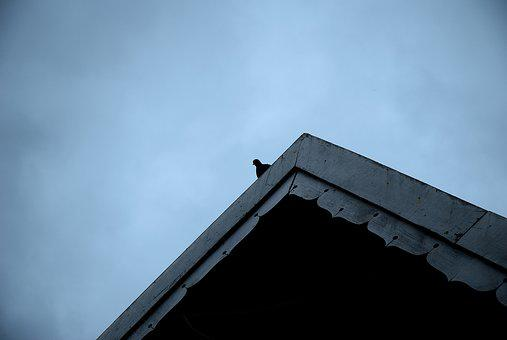 Pigeon, Lonely, Single, One, Alone, Gloomy, Dove, Roof