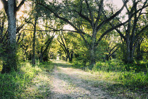 Pecan, Agriculture, Trail, Forest, Grove, Pecan-nut