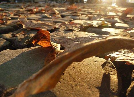 Autumn Beginning, True Leaves, Road, Autumn, Leaf