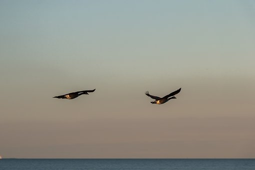 Geese, Wave, Baltic Sea, Sea, Water, Beach, Coast