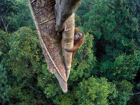 Orang Hutan, National Geographic, Winner, Green, Nature