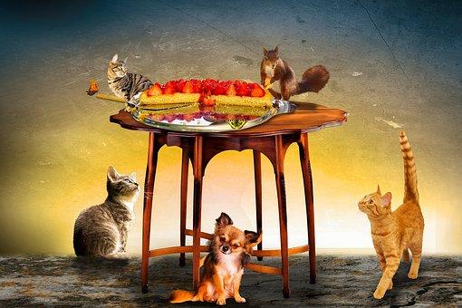 Animals, Cake, Eat, Strawberries, Strawberry Cake, Cat