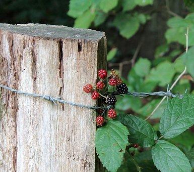 Berries, Autumn Beginning, Nature, Close, Plant