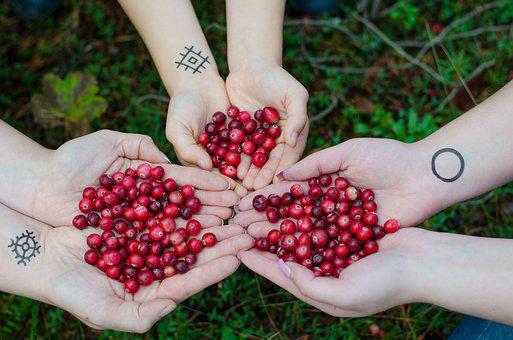 Cranberries, Berries, Swamp, Forest, Organic, Berry
