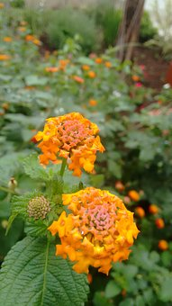 Photo, Camera, Beginner, Cellular, Flowers, Rain, Water