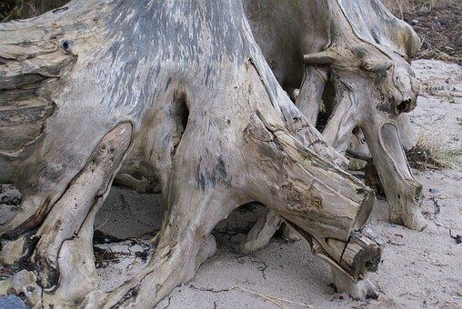 Wood Root, Cliff, Beach, Steep Slope, Sea, Baltic Sea