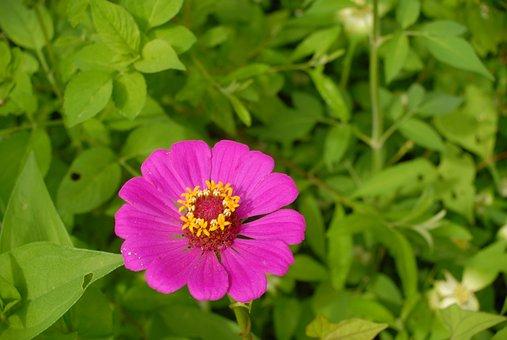 Flora, Wild, Flowers