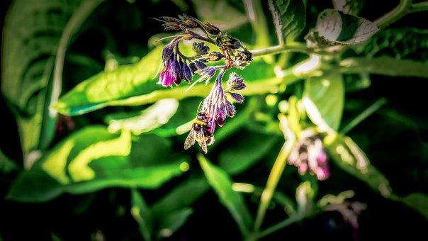 Bee, Flower, Garden, Pollen, Pollination, Nectar, Macro