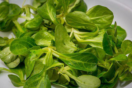 Salad, Lamb's Lettuce, Green Salad, Corn Salad