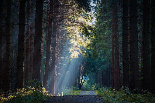 Forest, Trees, Fog, Sun, Rays, Nature, Landscape