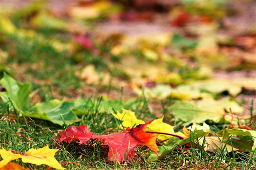 Autumn, Leaf, Grass, Colorful, Leaves, Red Leaves
