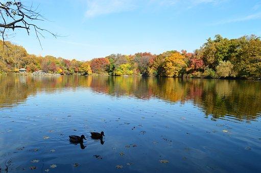 Central Park, New York, Manhattan, Newyork, Park