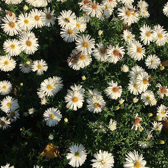 Flowers, Plant, Nature, Small Flowers, Garden