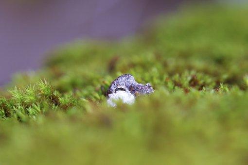 Rock, Moss, Nature