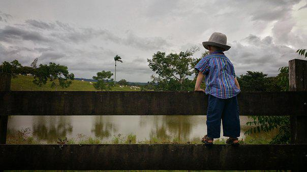 Child, Board Fence, Farm, Cattle, Farmer, Pond, Tree's
