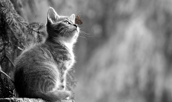 Cat, Kitten, Butterfly, Young Animal, Curious, Wildcat