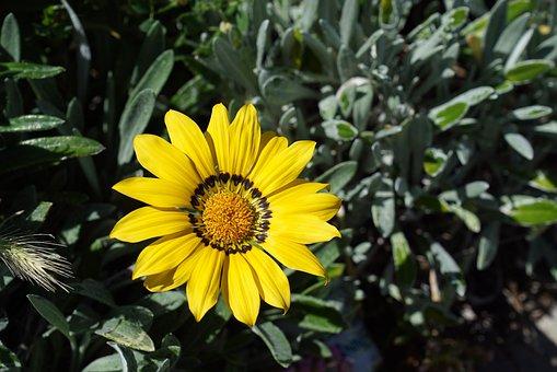 Wild Flowers, Adelaide, Blossom, Botany, Bush