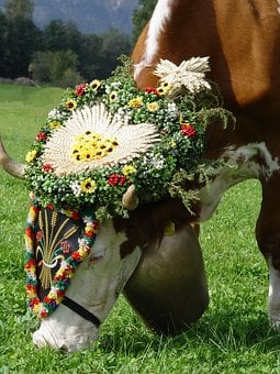 Cow, Almabtrieb, Customs, Tradition, Wreath Beef, Bell