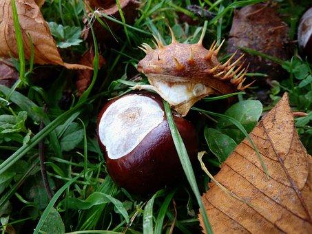 Chestnut, Fruit, Maroni, Autumn Decoration, Nutrition