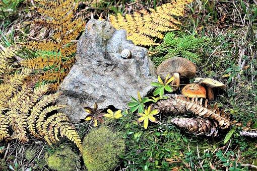 Mushrooms, Forest, Autumn, Litter, Moss Forest, Foliage
