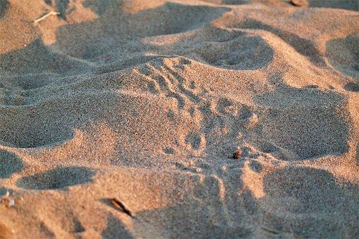 Trace, Sand, Beach, Animal, Nature, Sandy