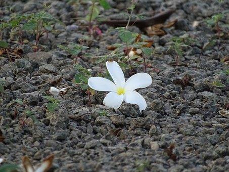 Flowers, Beautiful, Tree, Nature, Beauty, Yellow