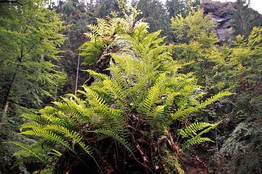 Bracken, Ferns, Nature, Forest, Covered Tree