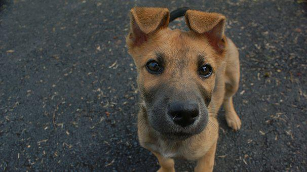 Dog, Curious, Cute, Funny, Puppy, Happy, Adorable, Face