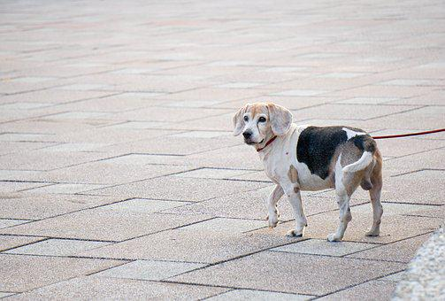 Dog, Doggy, Cute, Animal, Puppy, Pet, Domestic, Breed