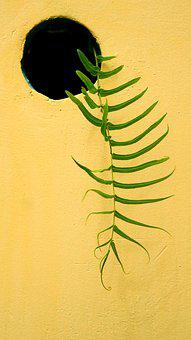 The Leaves, Wall, Fern, Plant