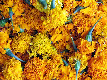 Laos, Market, œillet Of India, Power, Food, Display