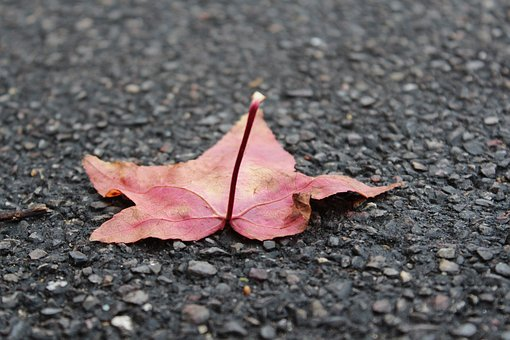 Leaf, Nature, Ground, Eco, Environmental, Land, Green