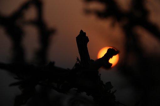 Pushkar, Sunrise, India, Travel, Rajasthan, Landscape