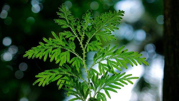 Backlight, Leaf, Leaves, Green, Nature, Light, Sunlight