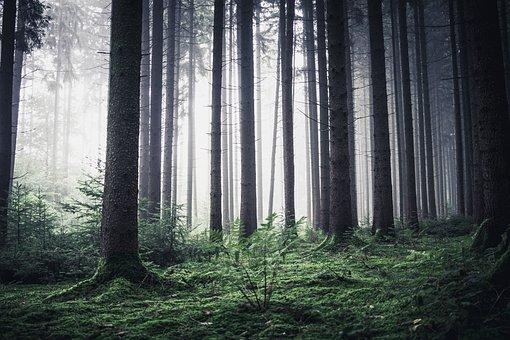 Forest, Morning, Nature, Morgenstimmung, Good Morning