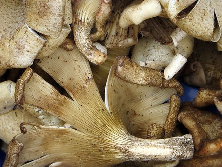 Laos, Market, Mushrooms, Power, Food, Display, Eat