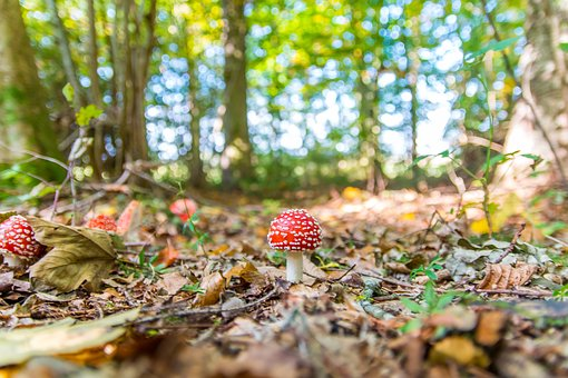 Forest, Nature, Toxic, Mushrooms