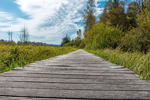 Moor, Web, Forest, Nature, Horizon, Moss, Away