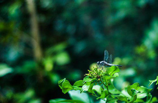 Dragonfly, Nature, Tree
