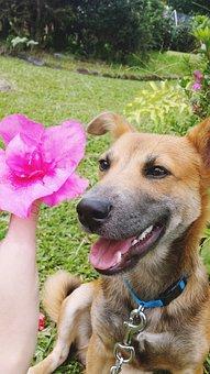 Dog, Flower, Puppy, Cute, Pet, Animal, Spring, Summer