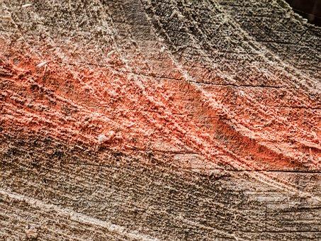 Wood, Section, Rauh, Surface, Color, Mark, Close, Grain