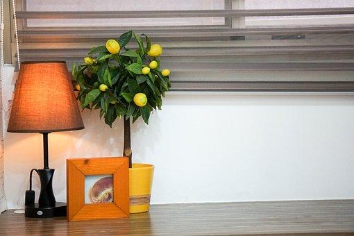 Table, Yellow, Orange, Green, Colorful, Wood, Bookshelf